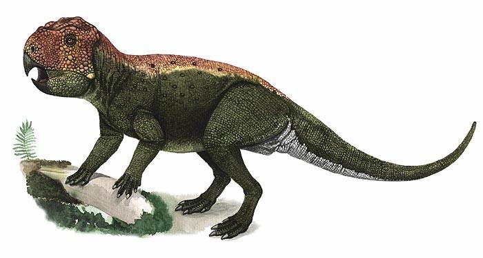 Lamaceratops