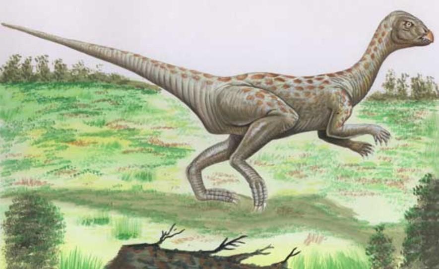 Lanasaurus