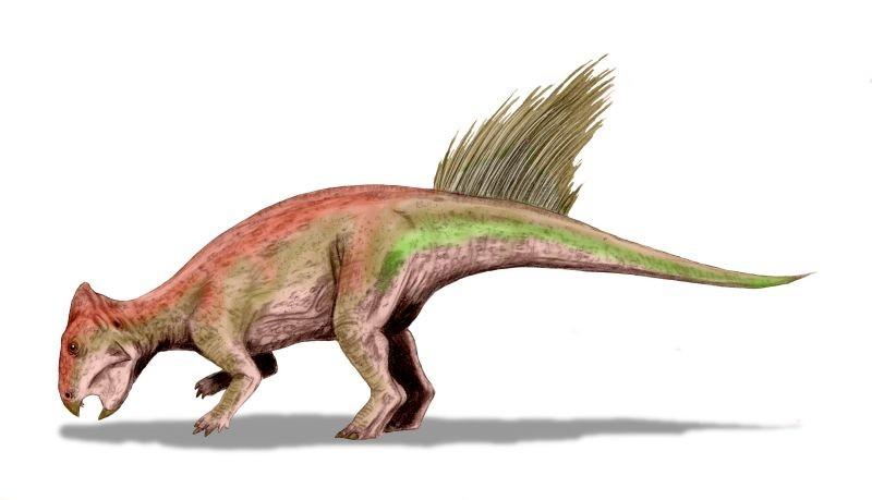 Liaoceratops