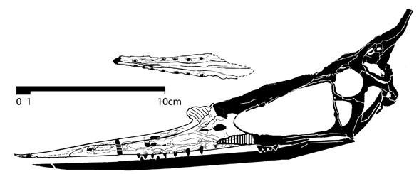 Lonchognathosaurus