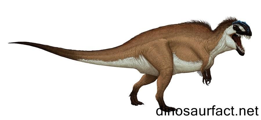 Lophostropheus