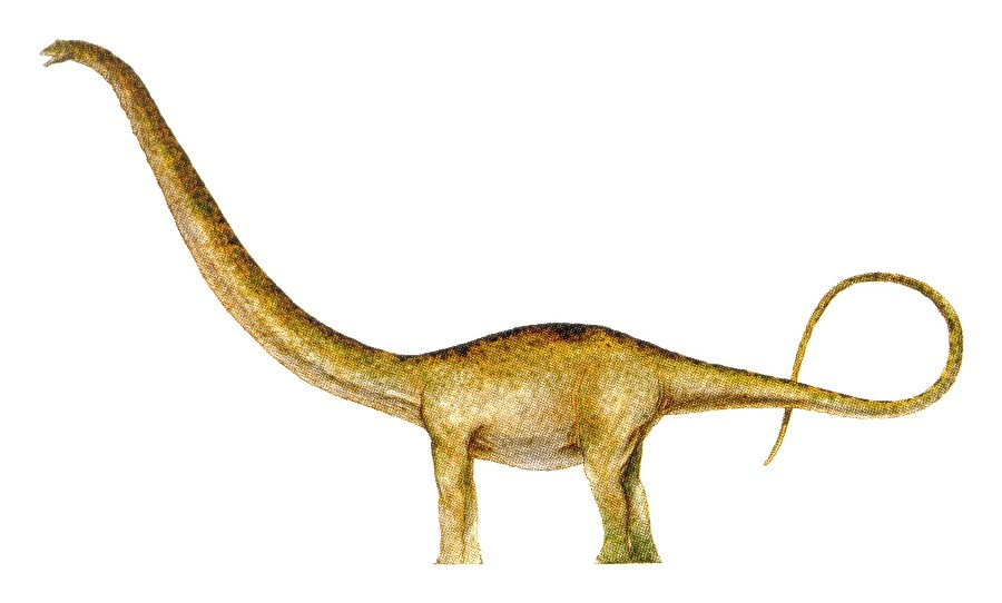 Mamenchisaurus Picture...