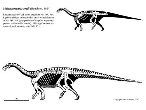 Melanorosaurus Pictures & Facts - The Dinosaur Database