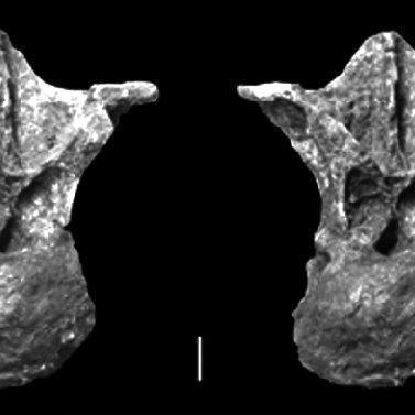 Muyelensaurus