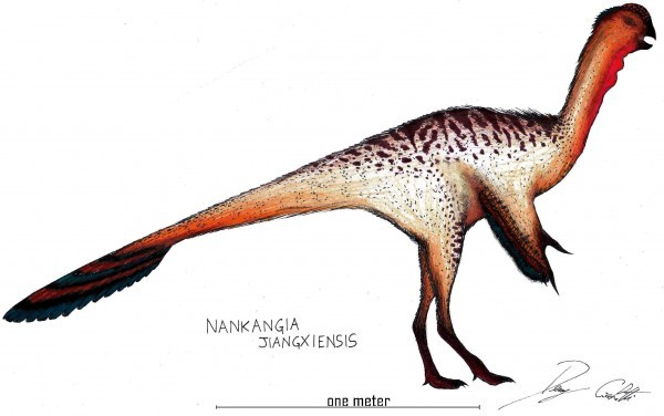 Nankangia