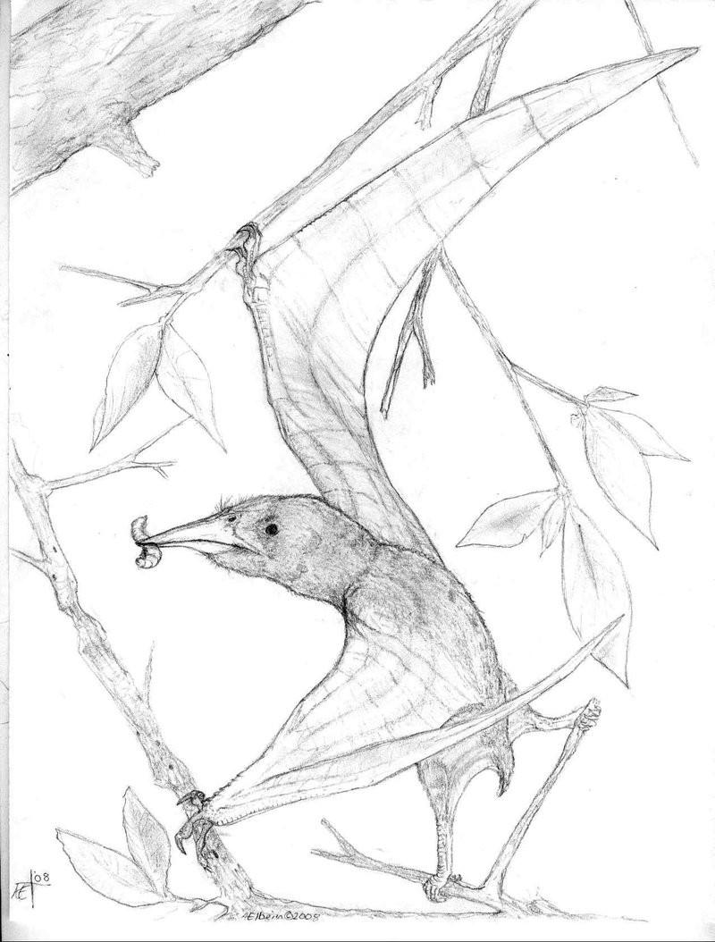 Nemicolopterus
