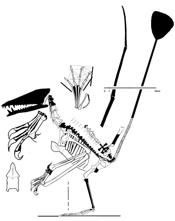 Nesodactylus