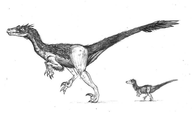Neuquenraptor