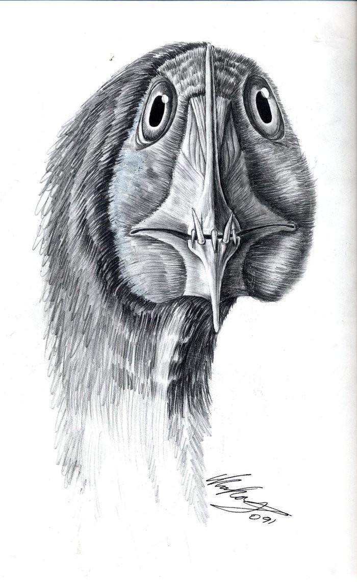 Liliensternus