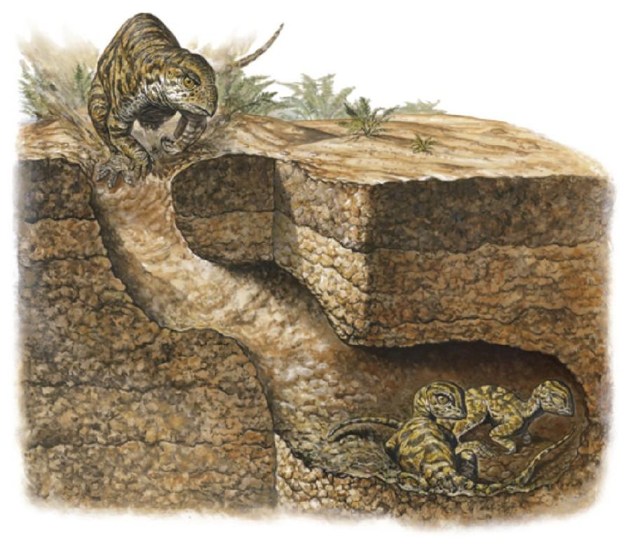 Oryctodromeus