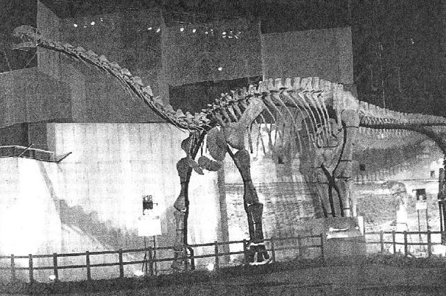 Otogosaurus