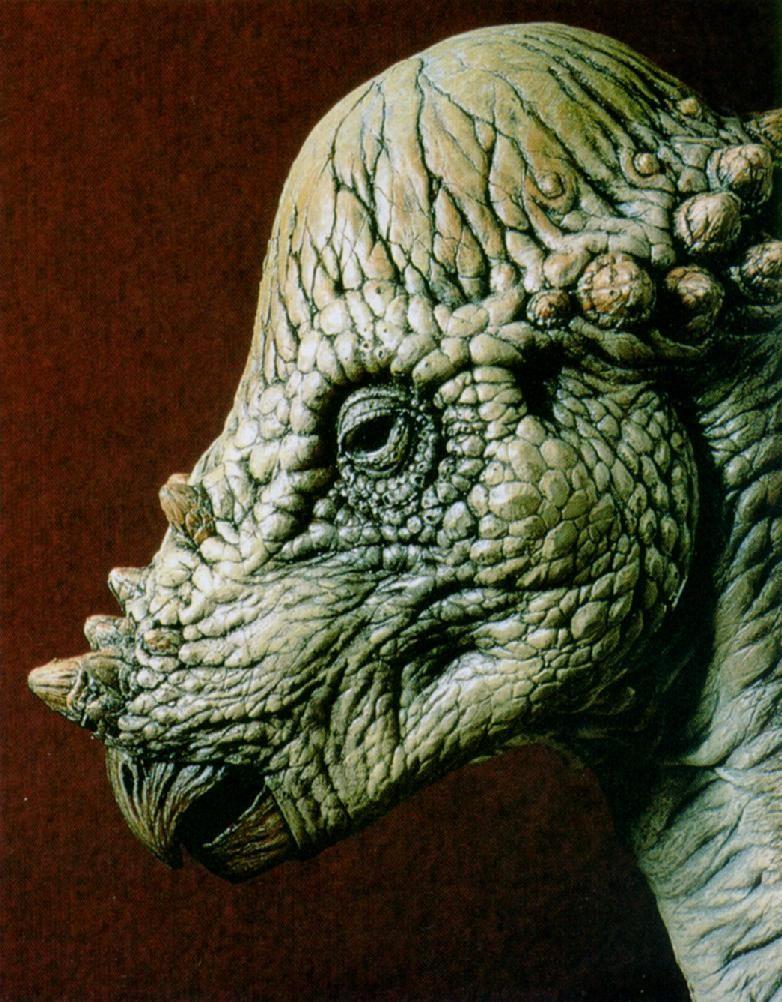 Pachycephalosaurus Pictures & Facts - The Dinosaur Database Pachycephalosaurus Head