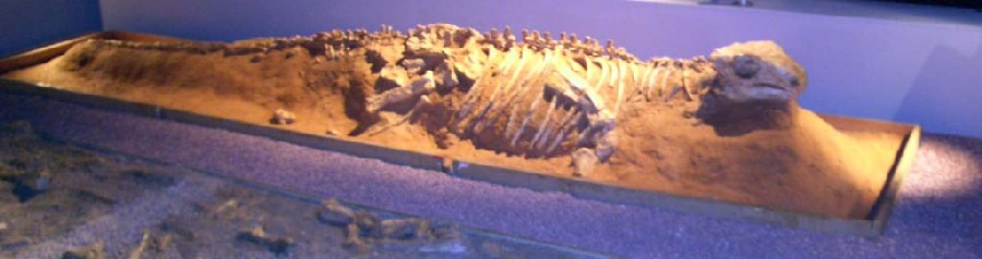 Pinacosaurus