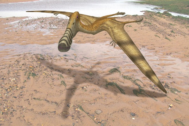 Plataleorhynchus