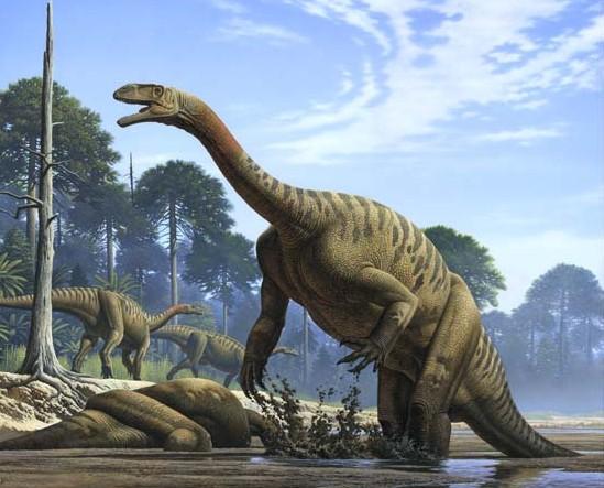 Plateosaurus_1_be90.jpg