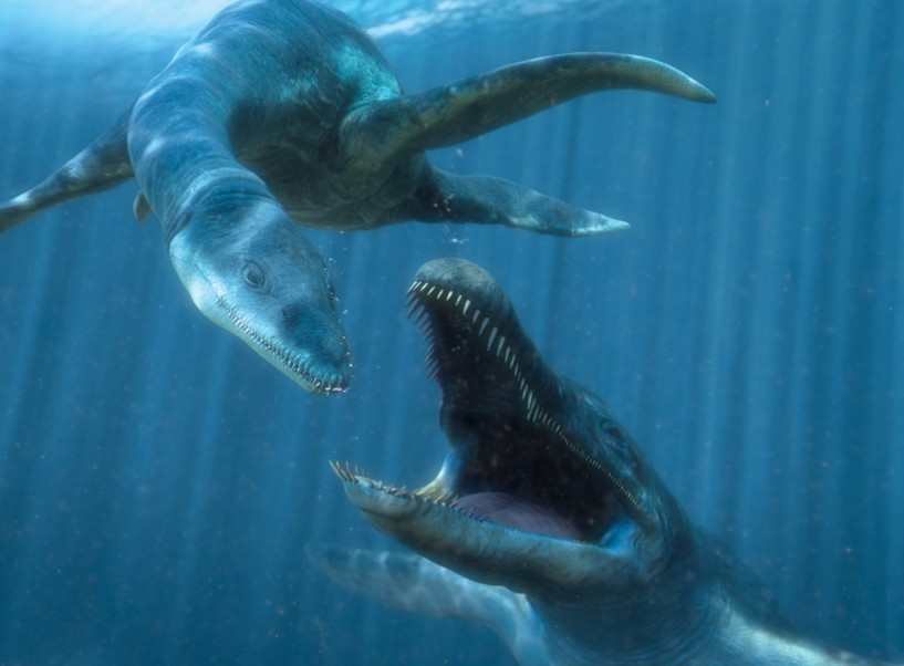 Kimmerosaurus