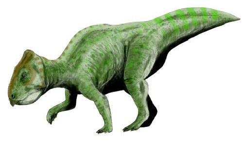 Prenoceratops