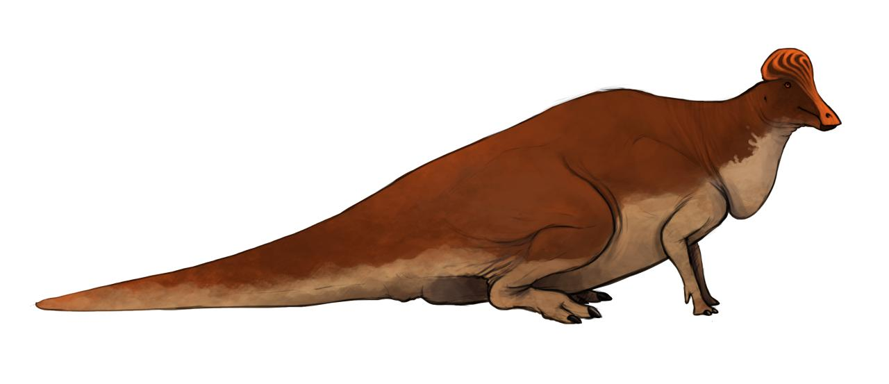 Pteropelyx