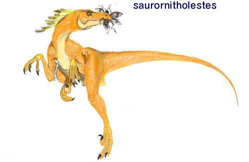 Saurornitholestes