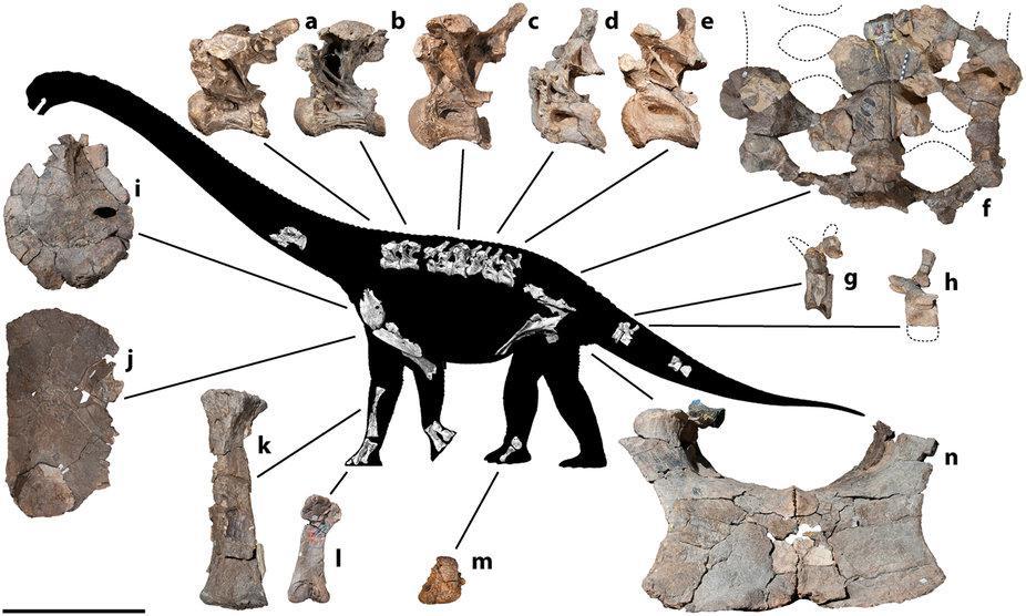 Savannasaurus