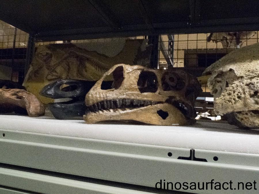 Sellosaurus
