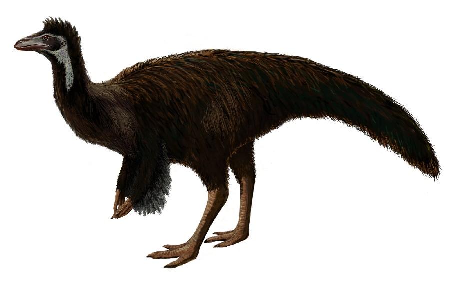 Sinornithomimus