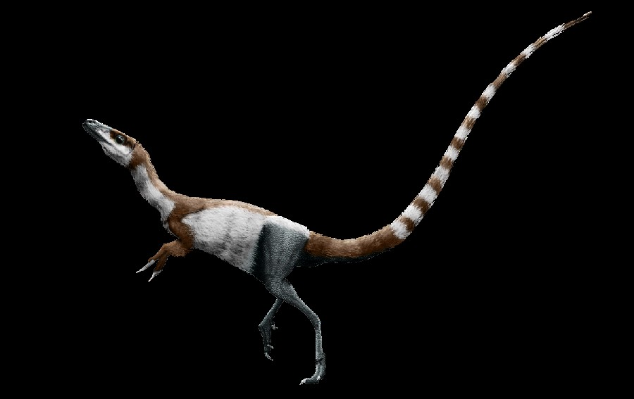 Sinosauropteryx Pictures & Facts - The Dinosaur Database