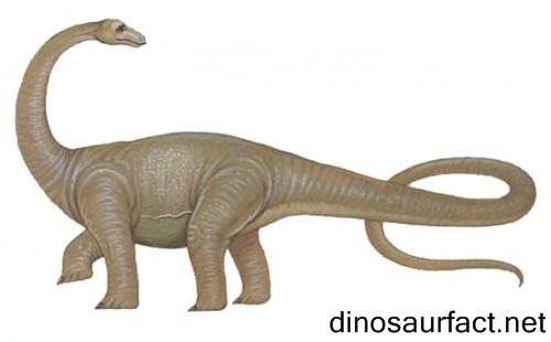 Supersaurus