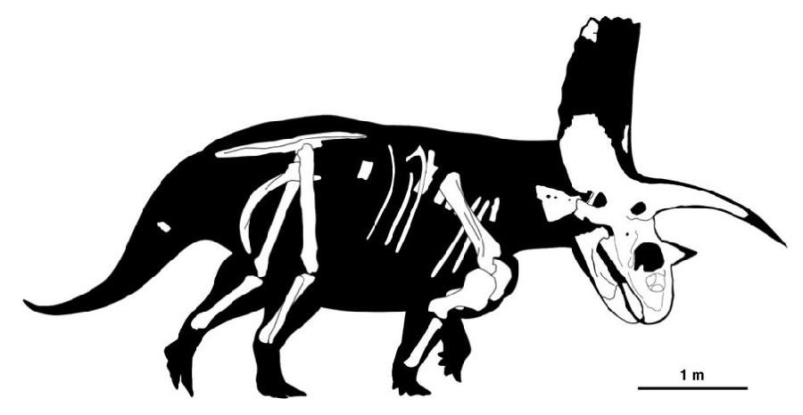Titanoceratops