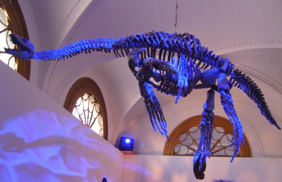 Tuarangisaurus
