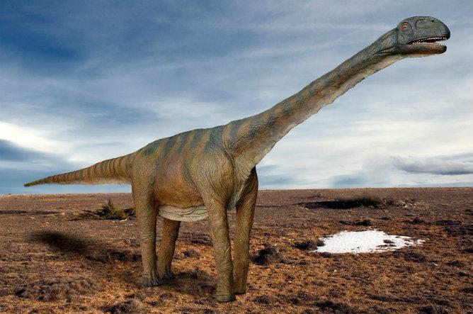 Картинки по запросу Turiasaurus riodevensis