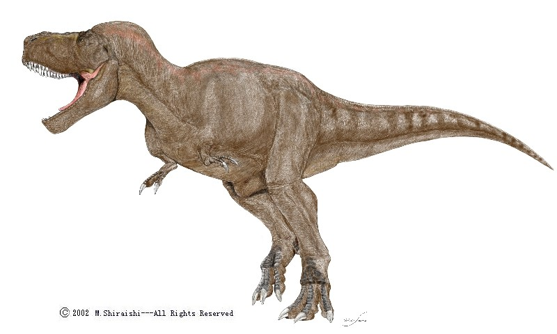 Tyrannosaurus pictures facts the dinosaur database for Tyranosaurus
