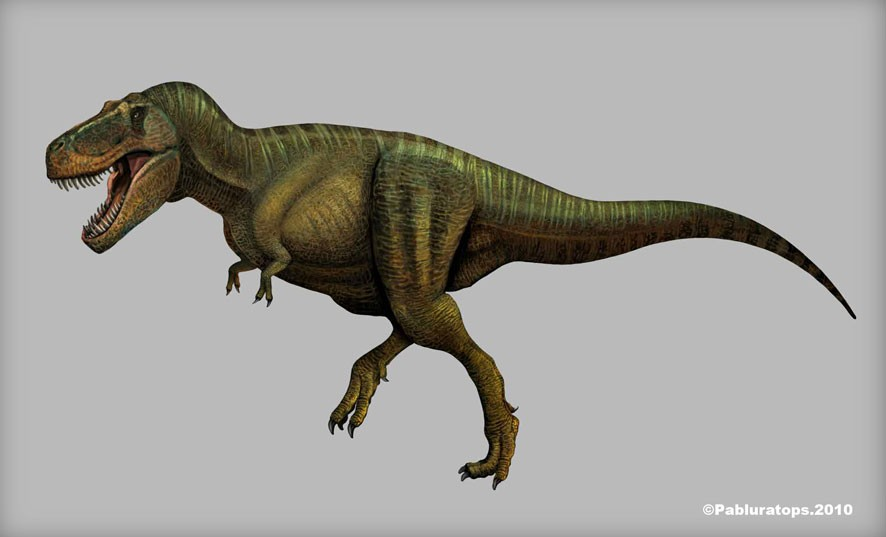 Tyrannosaurus pictures facts the dinosaur database tyrannosaurus altavistaventures Gallery