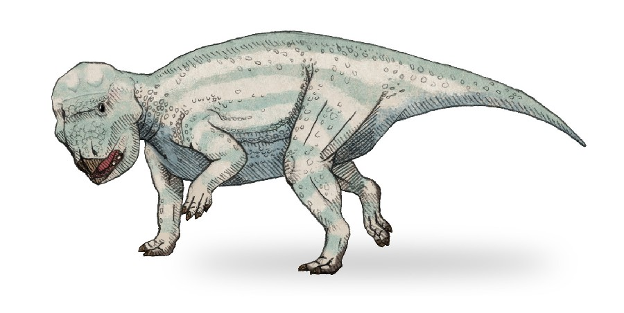 Udanoceratops Pictures & Facts - The Dinosaur Database