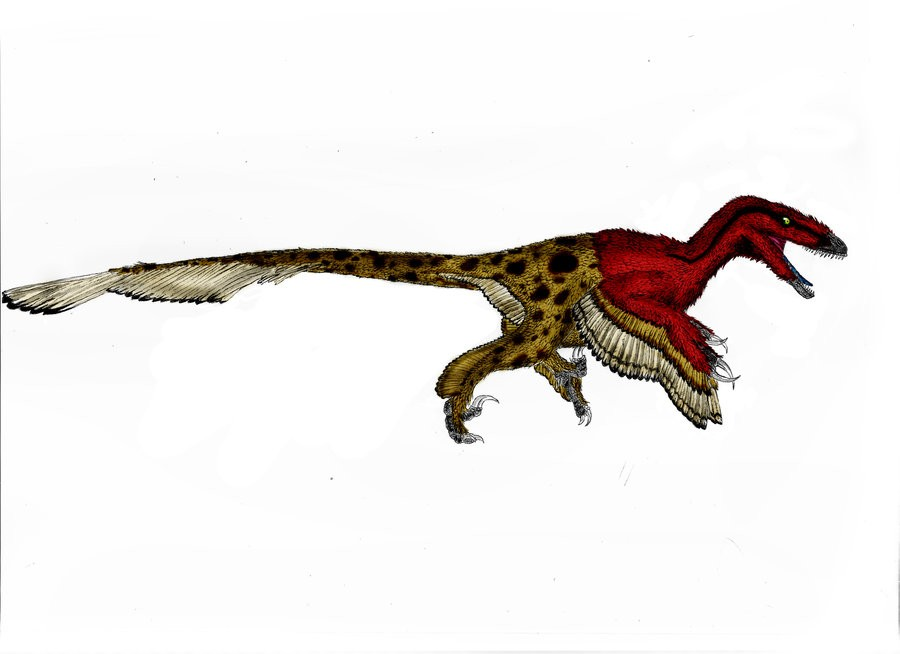 utahraptor pictures amp facts the dinosaur database