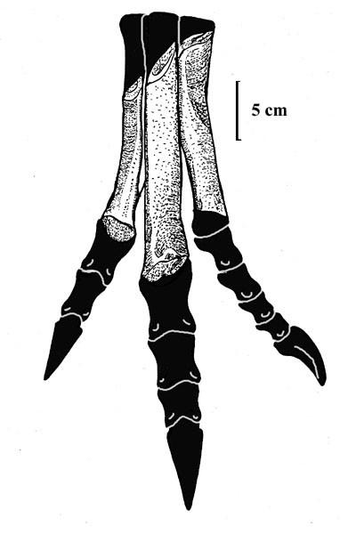 Valdoraptor