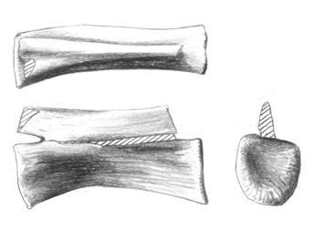 Walgettosuchus