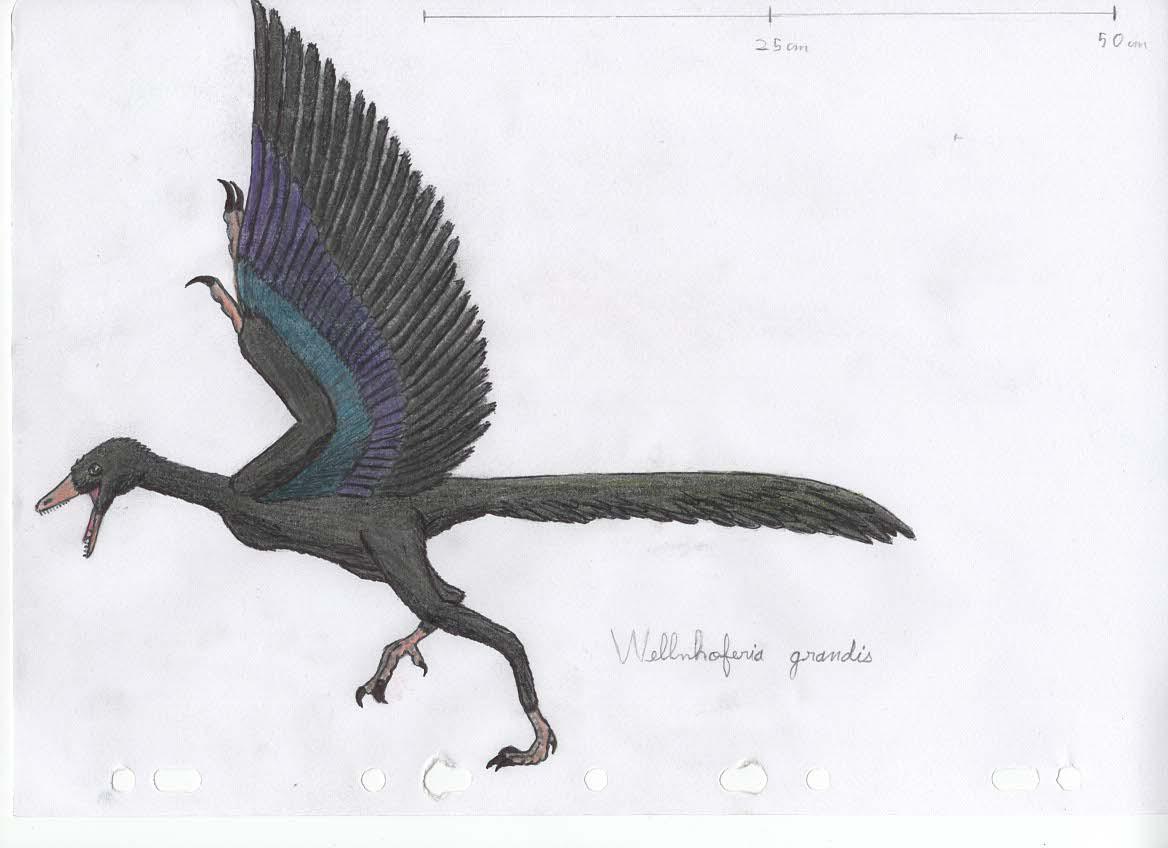 Wellnhoferia