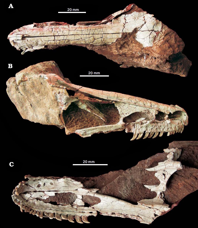 Xixiasaurus