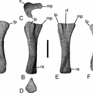 Zapalasaurus