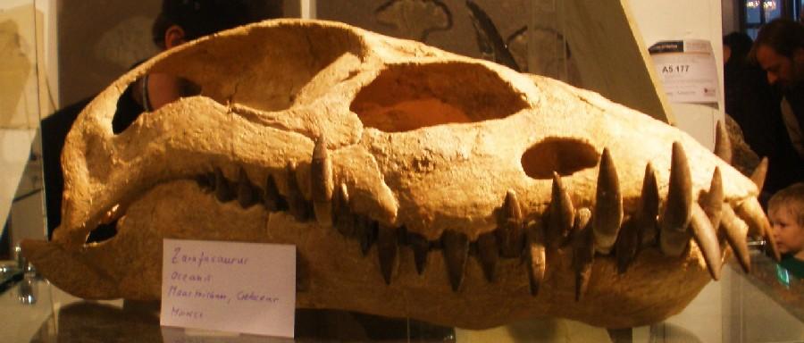 Zarafasaura