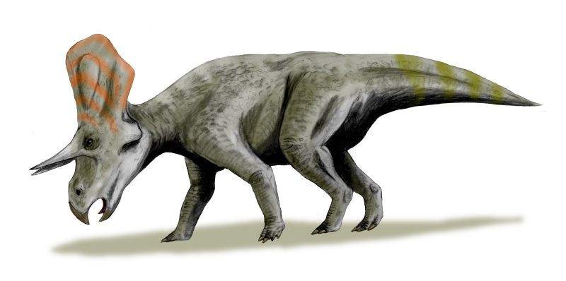 Zuniceratops Pictures Facts The Dinosaur Database