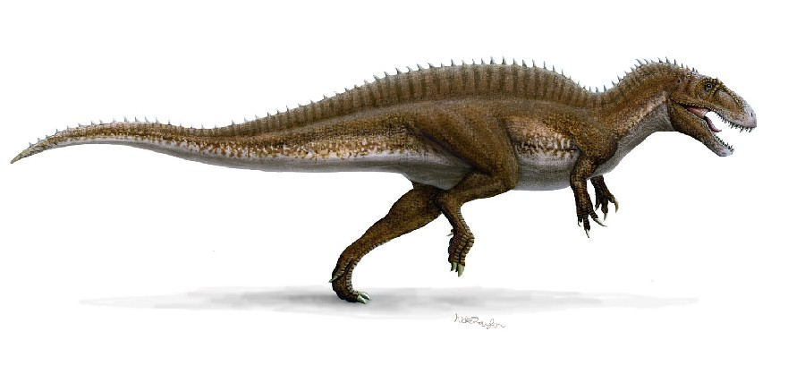 acrocanthosaurus pictures amp facts the dinosaur database