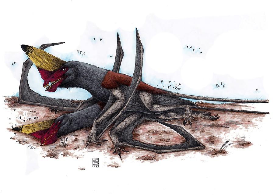 Caviramus