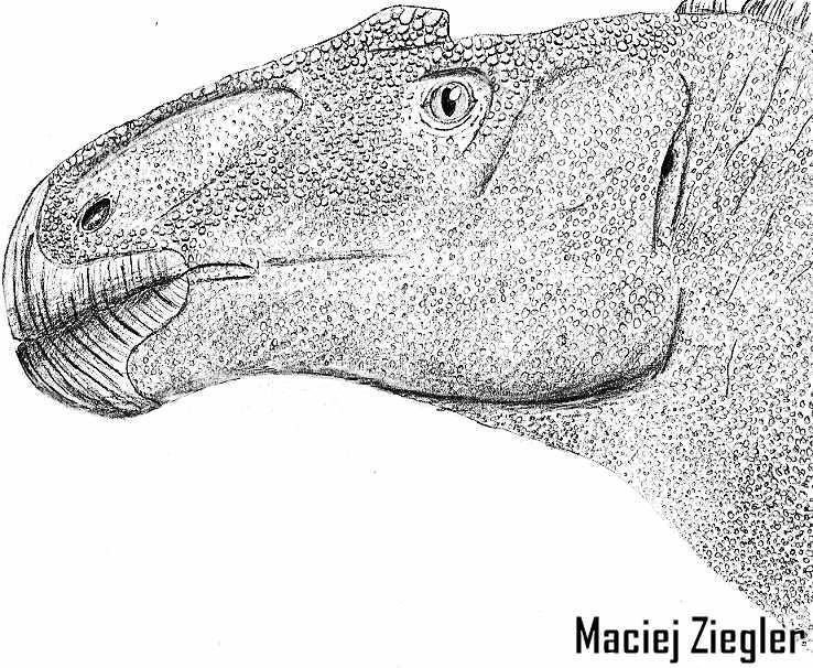 Anasazisaurus