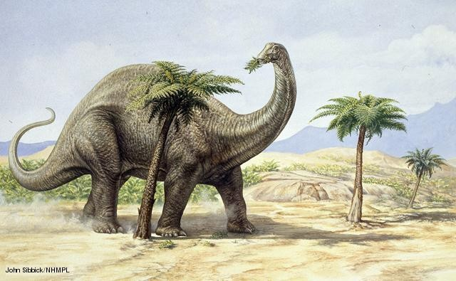 Apatosaurus Pictures & Facts