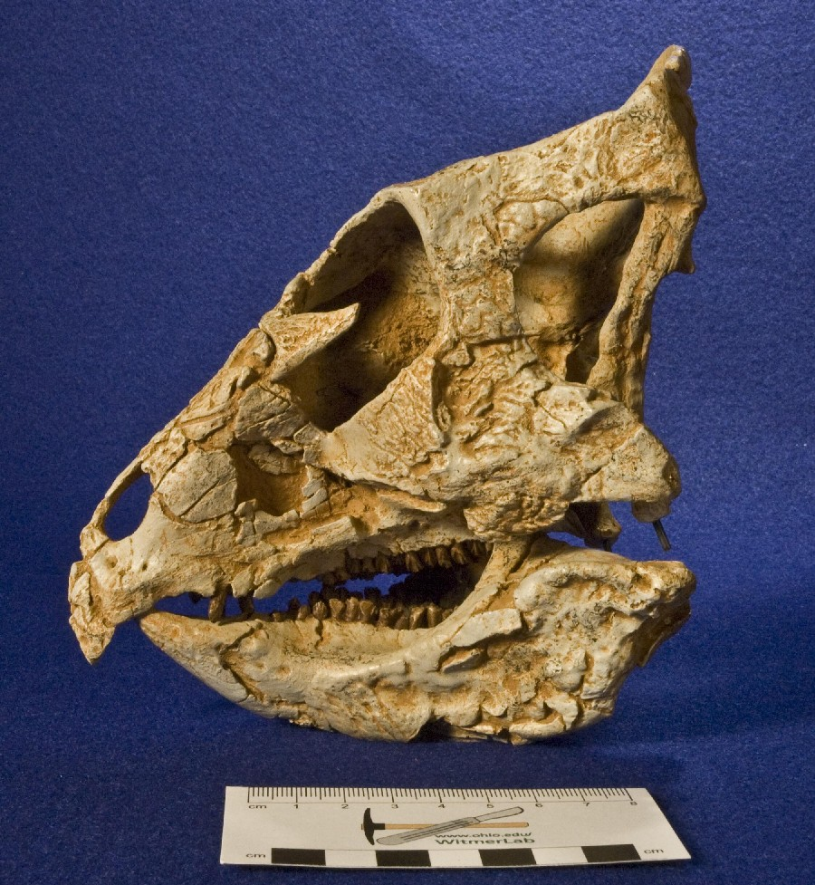 Archaeoceratops