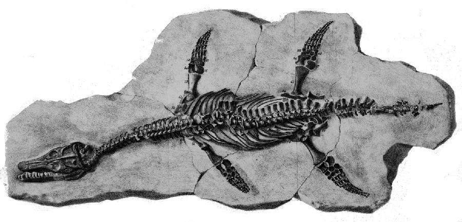 Archaeonectrus