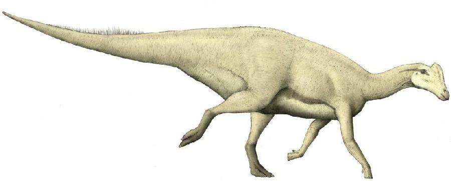 Resultado de imagen de arenysaurus