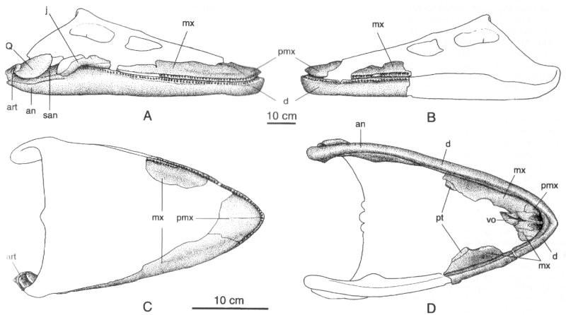 Aristonectes